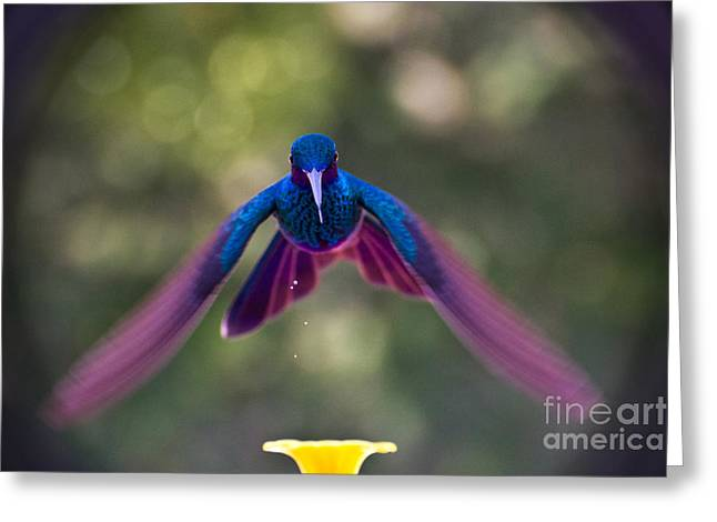 Hovering Greeting Cards - Always Leave Something On The Plate Greeting Card by Al Bourassa