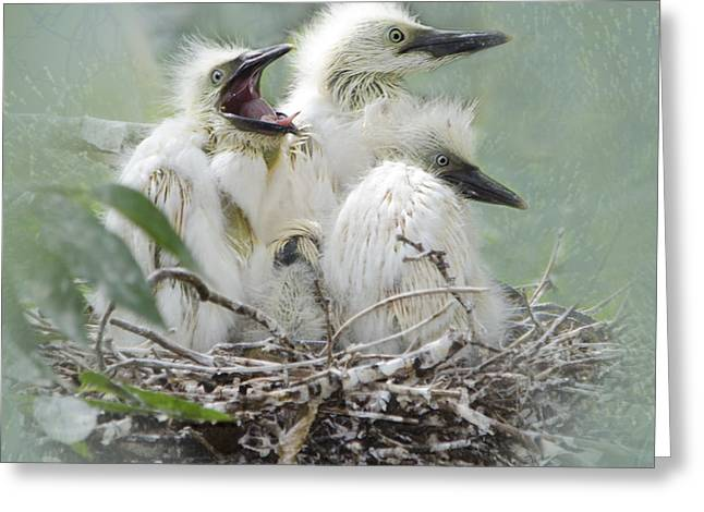 Cattle Egret Greeting Cards - Always One in a Crowd Greeting Card by Betty LaRue