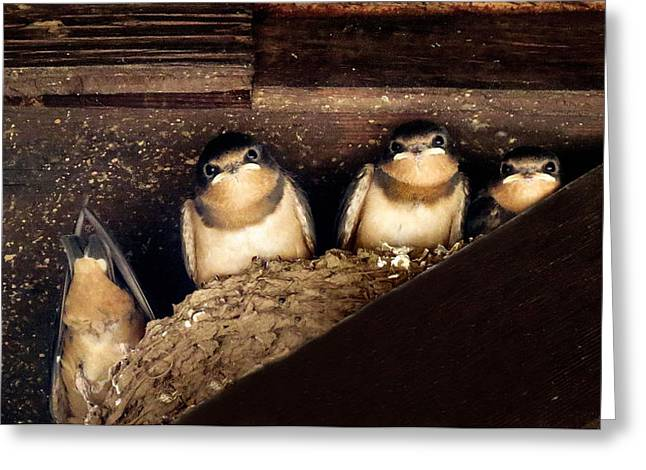 Swallow Nestlings Greeting Cards - Always One In The Group Greeting Card by Michelle Milano
