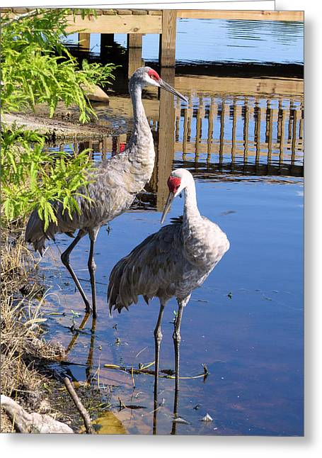 Crane Greeting Cards - Always together Greeting Card by Zina Stromberg
