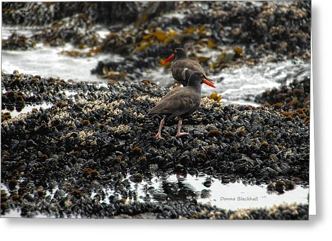 Sea Birds Greeting Cards - Always Walking On Shells With You Greeting Card by Donna Blackhall