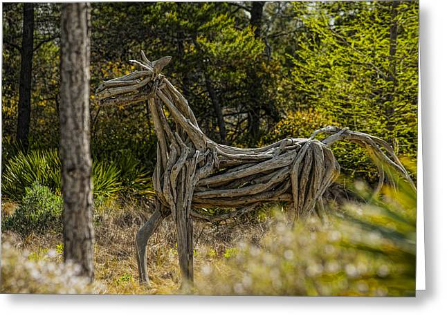 Frank Feliciano Greeting Cards - Alys Beach Driftwood Horse Greeting Card by Frank Feliciano