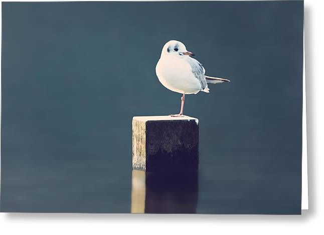 Gull Greeting Cards - Am I Alone Greeting Card by Wim Lanclus