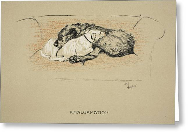 Terrier Dog Drawings Greeting Cards - Amalgamation, 1930, 1st Edition Greeting Card by Cecil Charles Windsor Aldin
