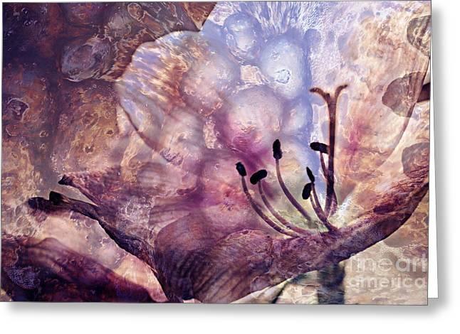 Amarillys Greeting Cards - Amarillys Fantasy Photoflower Art Greeting Card by Die Farbenfluesterin