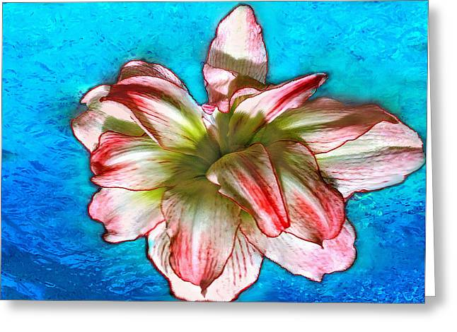 Hand Drawn Greeting Cards - Amaryllis in Blue Water Greeting Card by  Bob and Nadine Johnston
