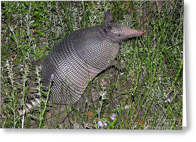 Al Powell Photography Usa Greeting Cards - Amazing Armadillo Greeting Card by Al Powell Photography USA