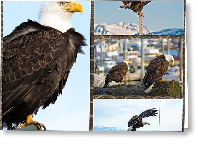 Eagle Greeting Cards - Amazing Bald Eagles Greeting Card by Debra  Miller