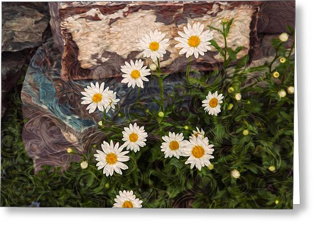 Okanogan National Forest Greeting Cards - Amazing Daisies Greeting Card by Omaste Witkowski