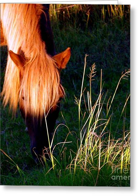 Wildlife Refuge. Greeting Cards - Amazing Graze Greeting Card by Janine Riley