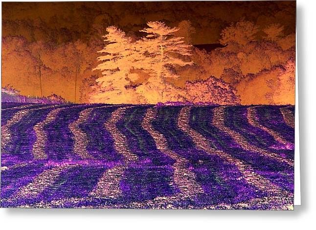 Amazing Summer Landscape - Negative Art - Reverse Imaging Greeting Card by James Scott Preston