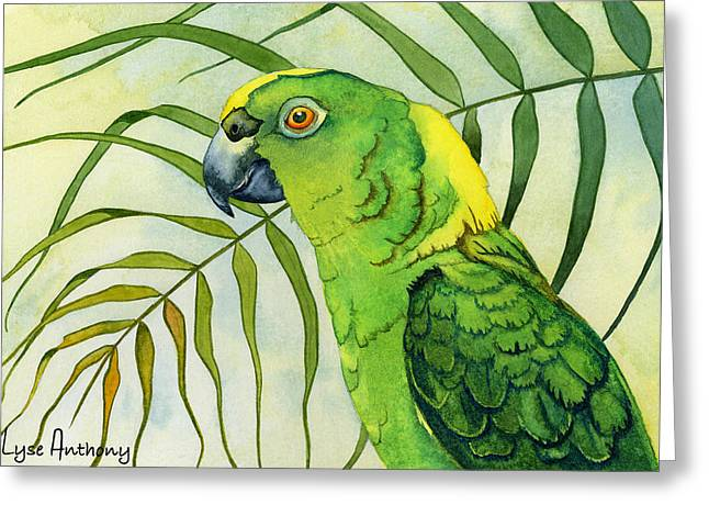 Macaw Greeting Cards - Amazon Greeting Card by Lyse Anthony