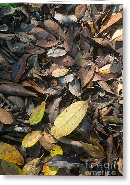 Forest Floor Greeting Cards - Amazon Rainforest Floor Greeting Card by William H. Mullins