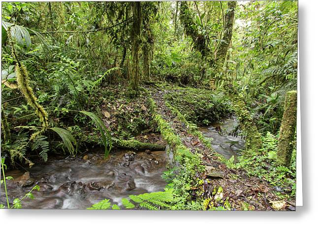 Amazonian Cloud Forest Greeting Card by Dr Morley Read