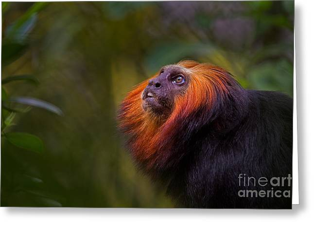 Dazed Greeting Cards - Amazonian Echoes Greeting Card by Ashley Vincent