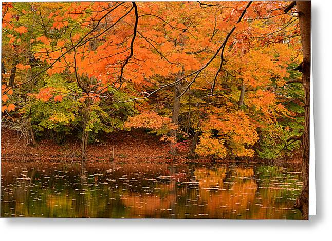 Red Maple Trees Greeting Cards - Amber Afternoon Greeting Card by Lourry Legarde
