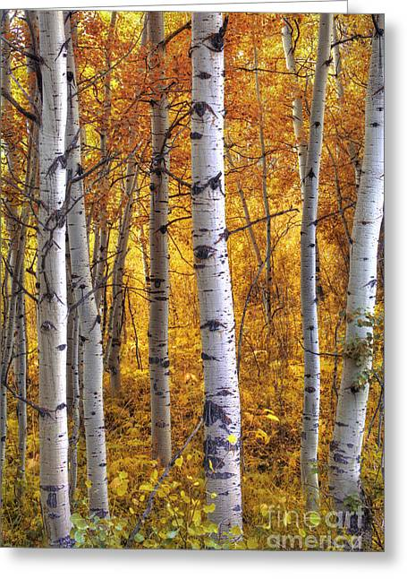 Ma Greeting Cards - Amber Aspens Greeting Card by Marco Crupi