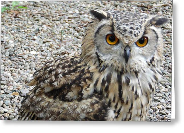 Hunting Bird Greeting Cards - Amber Eyes Owl Greeting Card by Mary J Tait