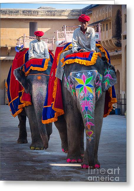 Riders Greeting Cards - Amber Fort Elephants Greeting Card by Inge Johnsson