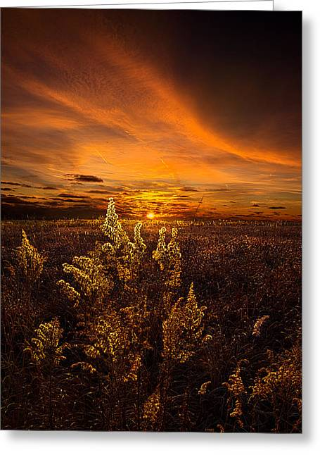 Geographic Greeting Cards - Amber Greeting Card by Phil Koch