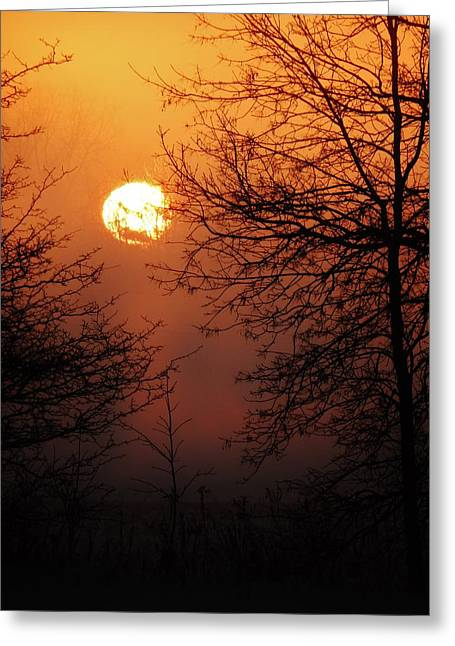 Dark Woods At Sunset. Greeting Cards - Amber Sky Greeting Card by Victoria Fischer