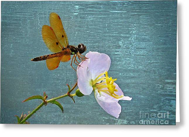 Amberwing Greeting Cards - Amberwing and Meadowbeauty Greeting Card by Deborah Smith
