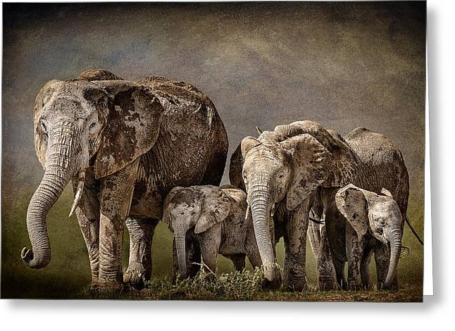 Concern Greeting Cards - Amboseli Herd Greeting Card by Mike Gaudaur