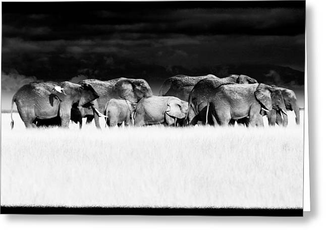 Walk Off Greeting Cards - Amboseli herd with egret Greeting Card by Mike Gaudaur