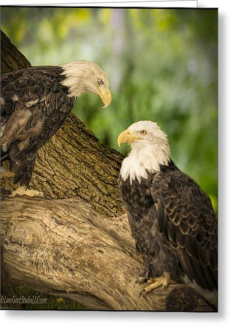 Eagle Greeting Cards - American Bald Eagle Chat Greeting Card by LeeAnn McLaneGoetz McLaneGoetzStudioLLCcom