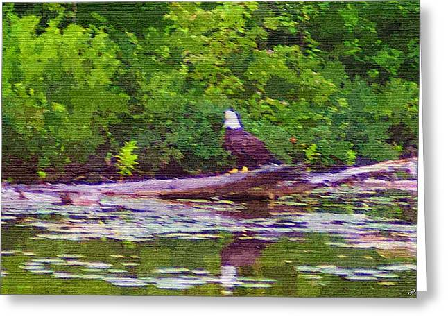 Wild Life Drawings Greeting Cards - American Bald Eagle Fishing For HIs Supper Greeting Card by Rosemarie E Seppala