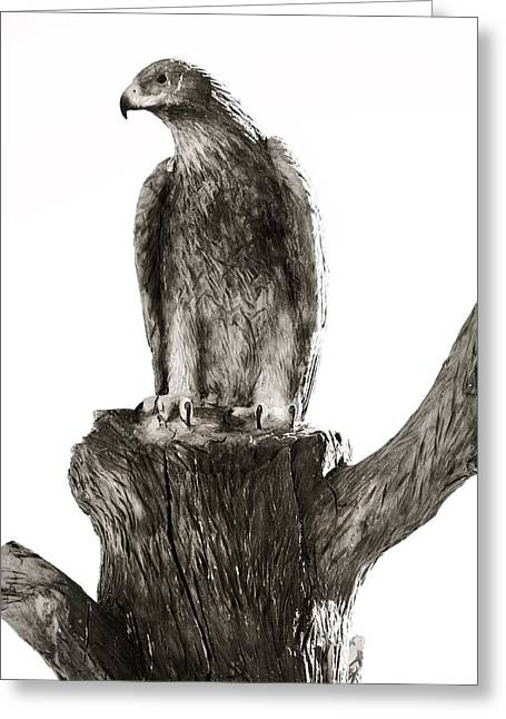 Carved Bird Greeting Cards - American Bald Eagle Greeting Card by Marilyn Hunt