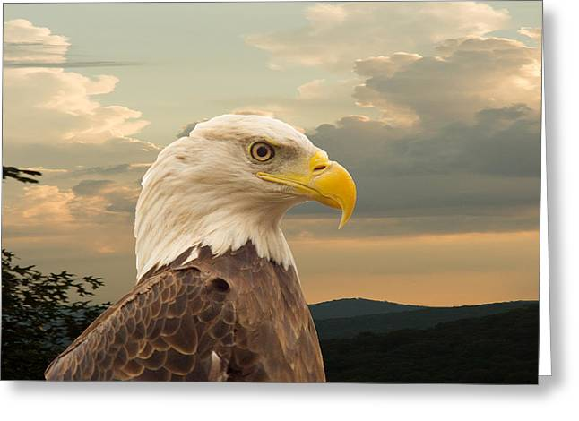 American Bald Eagle With Peircing Eyes Greeting Card by Douglas Barnett