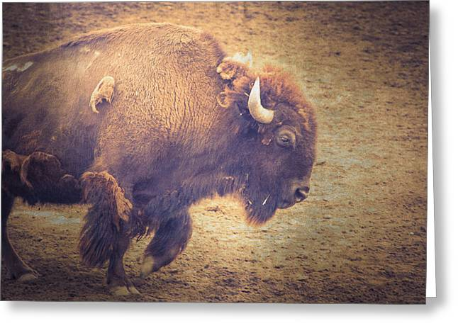 American Bison Greeting Card by Caitlyn  Grasso