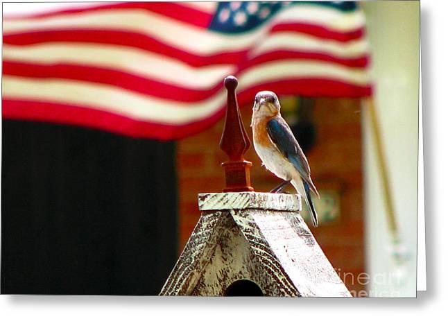 4th July Digital Art Greeting Cards - American Bluebird Greeting Card by Luana K Perez
