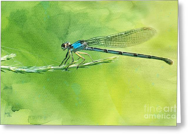 Damselfly Greeting Cards - American Bluet Damselfly Greeting Card by Betty LaRue