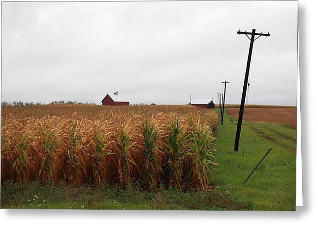Cornfield Greeting Cards - American Cornfield and Farmhouse Greeting Card by Frank Romeo