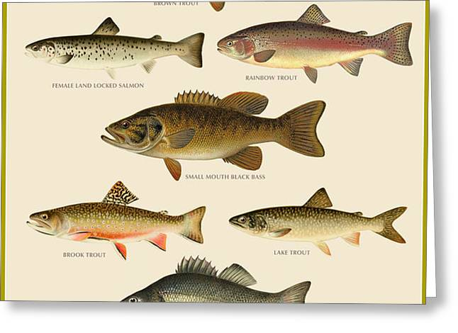 American Game Fish Greeting Card by Gary Grayson