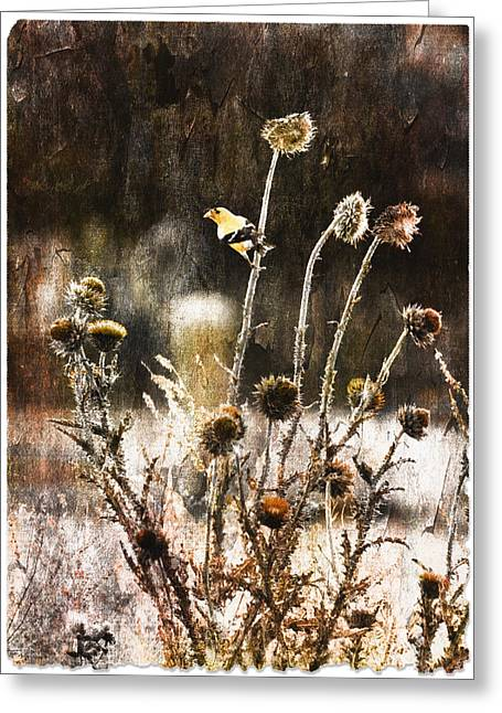 """photo Manipulation"" Paintings Greeting Cards - American Golden Finch - Fall Greeting Card by AGeekonaBike Photography"