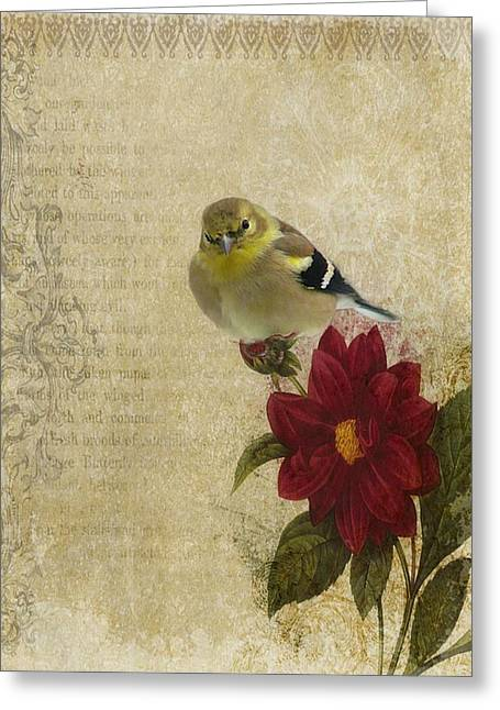 Photographs With Red. Greeting Cards - American Goldfinch Greeting Card by Stephanie Calhoun