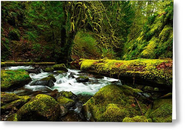 Columbia River Greeting Cards - American Jungle Greeting Card by Chad Dutson