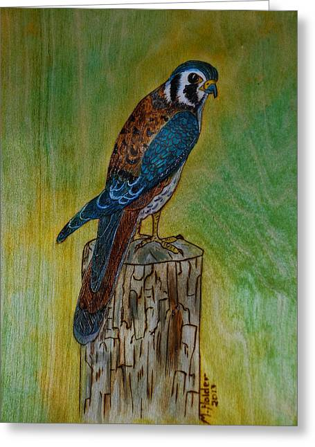 Sparrow Pyrography Greeting Cards - American Kestrel Falcon Greeting Card by Mike Holder