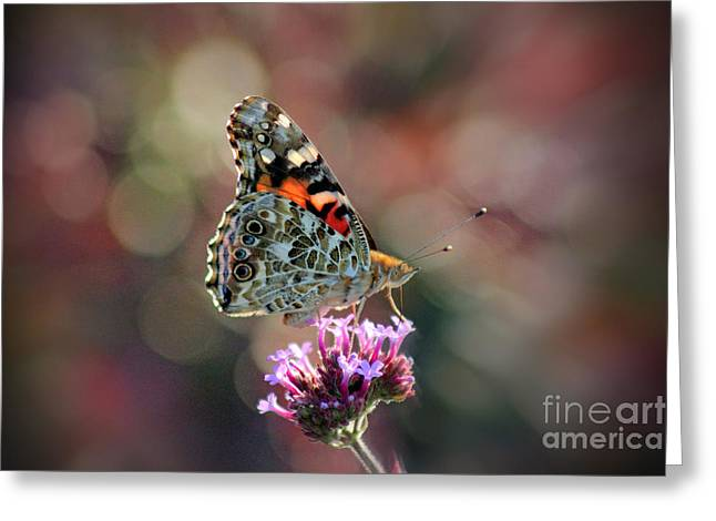 Sunlight On Flowers Greeting Cards - American Painted Lady Butterfly 2014 Greeting Card by Karen Adams