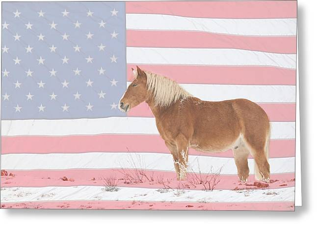 Americano Greeting Cards - American Palomino Greeting Card by James BO  Insogna