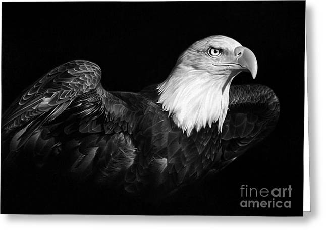 Wild Life Drawings Greeting Cards - American Pride Greeting Card by Miro Gradinscak