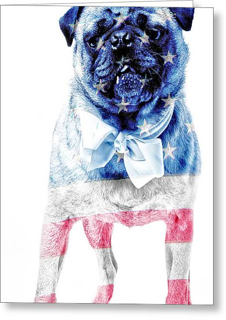 Flag Of Usa Greeting Cards - American Pug Phone Case Greeting Card by Edward Fielding