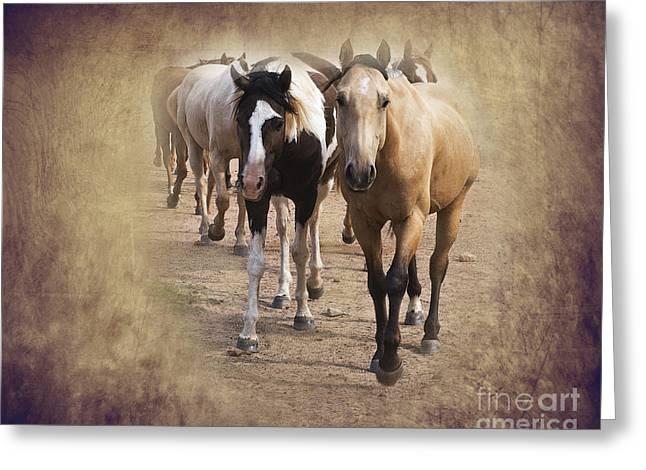 Quarterhorses Greeting Cards - American Quarter Horse Herd Greeting Card by Betty LaRue