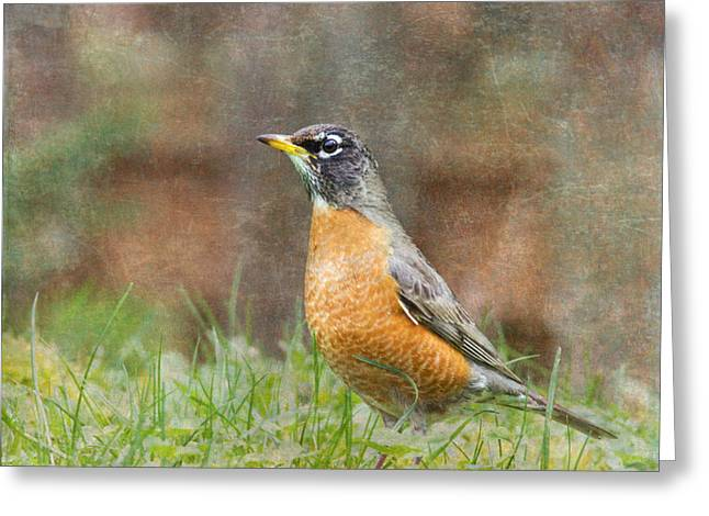 American Robin Greeting Cards - American Robin Greeting Card by Angie Vogel