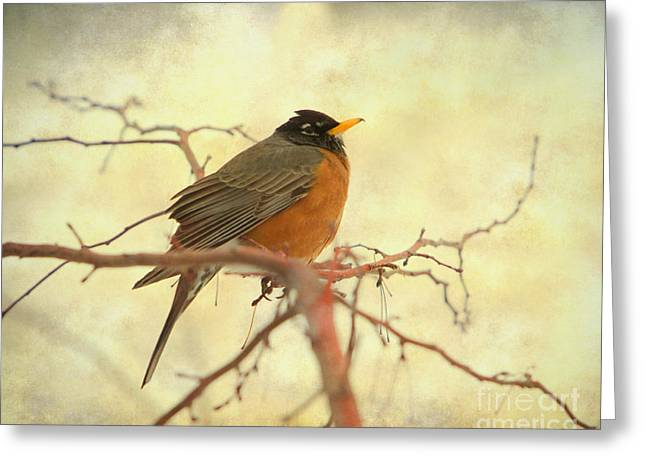 American Robin Greeting Cards - American Robin in The Springtime Greeting Card by James BO  Insogna