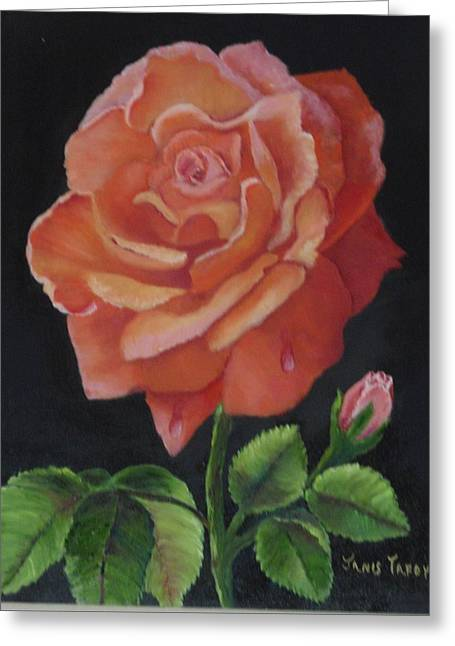Shades Of Red Greeting Cards - American Rose Greeting Card by Janis  Tafoya