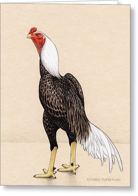 Eagle Feathers Greeting Cards - American Shamo Greeting Card by Katherine Plumer